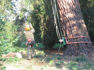 ropes secured to tree and winch
