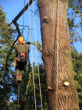 tree team member climbing up a rope