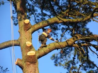 climbing along a limb