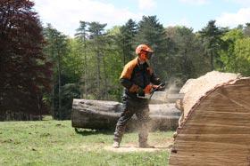 A Westonbirt log